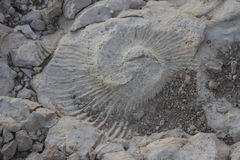 Grand grand fossile Photos stock