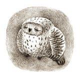 Grand Grey Owl Sleeping In une cavité Photo libre de droits