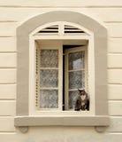 Grand gros chat se reposant dans la fenêtre, chat domestique dehors photographie stock libre de droits