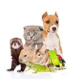 Grand groupe d'animaux Sur le fond blanc Images stock