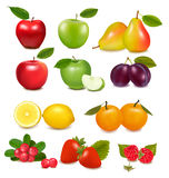 Grand groupe de fruit différent illustration stock