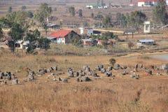 Grand groupe de pots à la plaine des pots photographie stock libre de droits