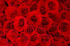 Grand groupe de roses Photographie stock