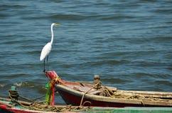Grand héron blanc se tenant sur le bateau photo stock