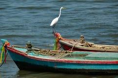 Grand héron blanc se tenant sur le bateau Image libre de droits
