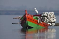 Grand h?ron, s?ance alba d'Ardea sur un bateau de p?che chez Bhigwan, Pune, maharashtra, Inde photographie stock libre de droits