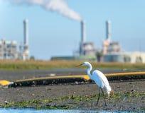 Grand héron sur le rivage de la baie d'Alamitos avec des cheminées à l'arrière-plan Photos stock
