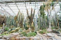 Grand hall de cactus montrant les usines tolérantes de sécheresse dans le jardin botanique de Munich Photographie stock