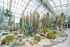 Grand hall de cactus montrant les usines tolérantes de sécheresse dans le jardin botanique de Munich Images libres de droits