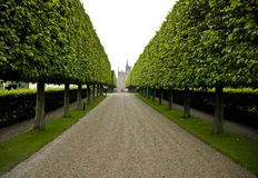 Grand hedge lined driveway Stock Images