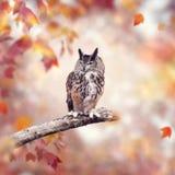 Grand hibou à cornes dans les bois d'automne photo libre de droits