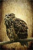 Grand hibou à cornes sur la texture antique Photo stock