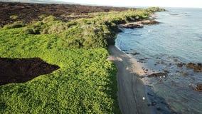Grand littoral d'Hawaï d'île clips vidéos