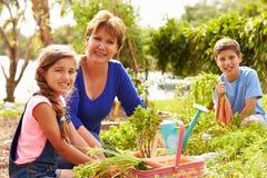Grand-mère avec des petits-enfants travaillant à l'attribution Image stock