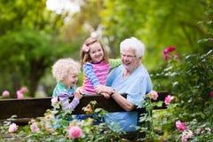 Grand-mère et enfants s'asseyant dans la roseraie Image stock