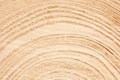 Grand morceau circulaire de section transversale en bois avec le mod?le de texture d'anneau d'arbre et le fond de fissures Surfac photographie stock libre de droits