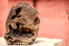 Grand morceau d'un tronc d'un vieil arbre Images libres de droits
