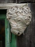 Grand nid du ` s de guêpe sur un mur en bois près d'une fenêtre photo stock