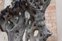 Grand oeil découpé sur une vieille paupière antique d'oeil d'olivier de tronc d'arbre photographie stock