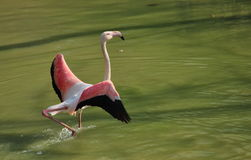 Grand oiseau Image stock