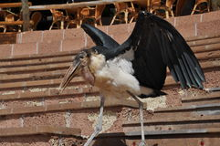 Grand oiseau Photo libre de droits