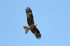 Grand oiseau Photos libres de droits