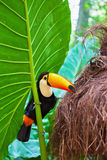 Grand oiseau avec le plumage lumineux photos stock