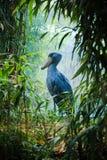 Grand oiseau bleu Images libres de droits