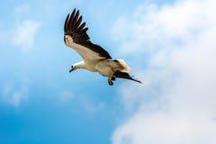 Grand oiseau dans le ciel Photos stock