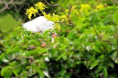 Grand oiseau de héron dans le plumage d'élevage dans le nid Images libres de droits