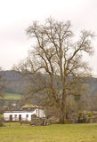 Grand Old Tree. Stock Images