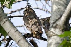 Grand Owl Holding Captured Rodent à cornes Photos stock