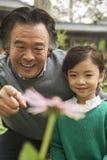Grand-père et petite-fille de sourire regardant la fleur dans le jardin Photographie stock libre de droits