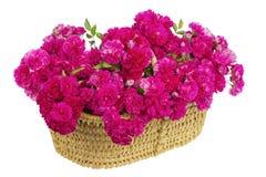 Grand panier avec le bouquet énorme des roses roses Images libres de droits