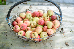 Grand panier des pommes Image libre de droits