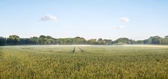 Grand panorama d'un grainfield dans le soleil de matin avec le brouillard Bayreuth, Allemagne Photo libre de droits
