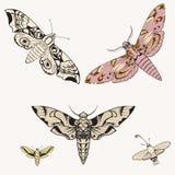 Grand papillon - modèle de vecteur wallpaper Photographie stock
