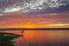 Grand parc du comté de lagune au coucher du soleil avec l'oiseau dans le premier plan image libre de droits