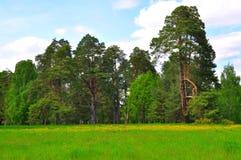 Grand parc l'Alexandrie, Ukraine de clairière Photos libres de droits