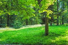 Grand parc vert Images libres de droits