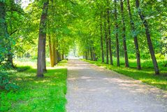 Grand parc vert Photo stock