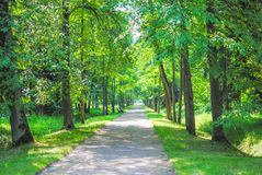 Grand parc vert Photo libre de droits