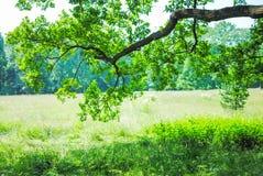 Grand parc vert Photos libres de droits