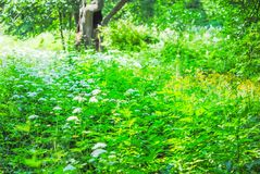 Grand parc vert Images stock