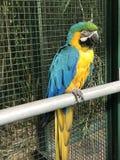 Grand perroquet dans le zoo photographie stock libre de droits