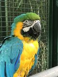 Grand perroquet dans le zoo photos libres de droits