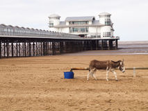 Grand pier and Donkey on beach, Weston Super Mare Stock Photography