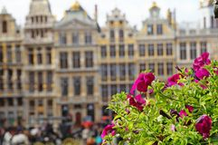 Grand Place in Brussels. Many tourists walk and look at beautiful buildings on the main square in Brussels. Flowers bloom on the Grand Place in Brussels royalty free stock photo