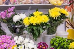 Grand plan rapproché blanc pourpre jaune frais de chrysanthème Photographie stock