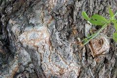 Grand plan rapproché d'écorce d'arbre photo stock